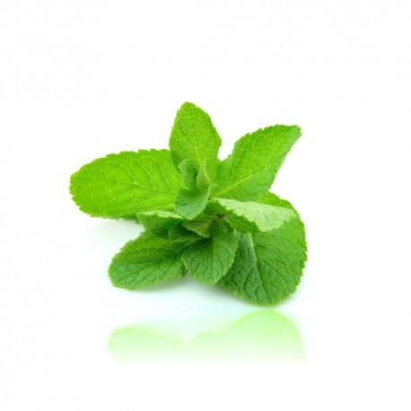 Qualitäts-Aroma York Peppermint 10ml